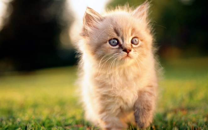 Pictures of Cute Kittes (22)