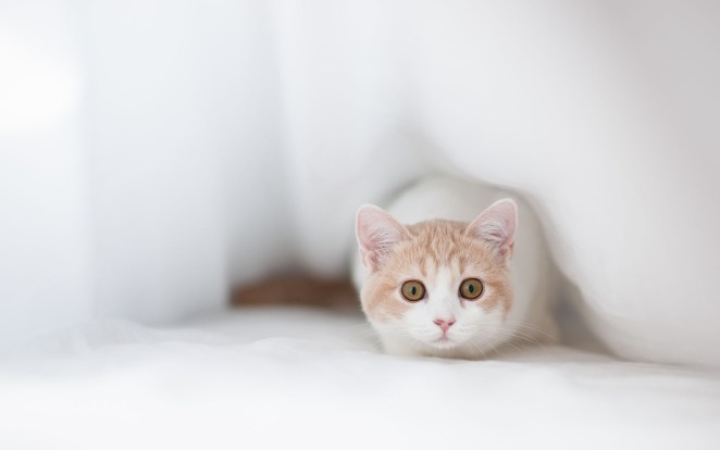 Pictures of Cute Kittes (24)