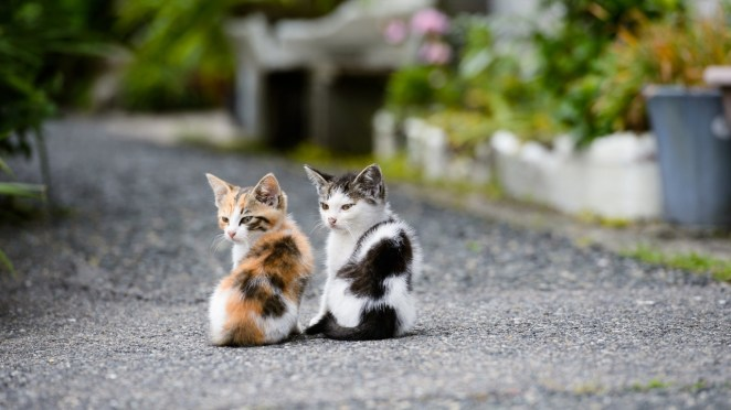 Pictures of Cute Kittes (25)