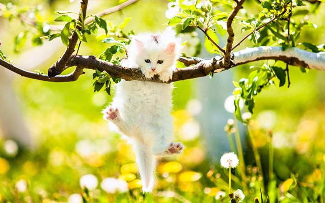 Pictures of Cute Kittes (26)