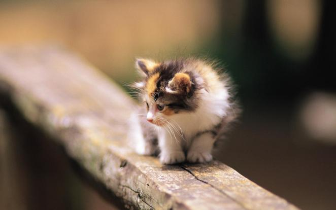 Pictures of Cute Kittes (29)