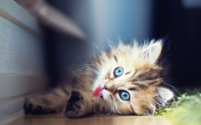 Pictures of Cute Kittes (30)
