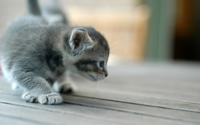 Pictures of Cute Kittes (31)