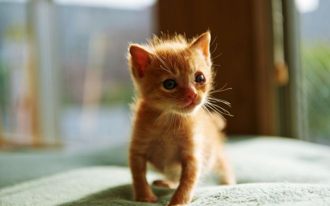 Pictures of Cute Kittes (5)