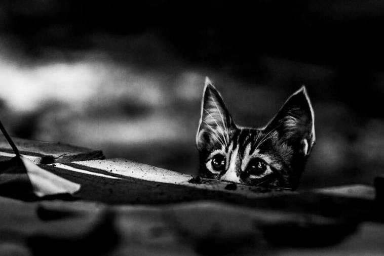 cat-photography-7