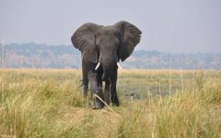 Elefante_Parco_Chobe