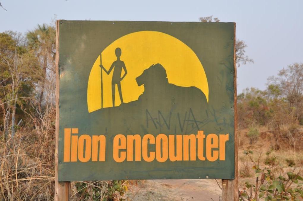 Incontro con i leoni