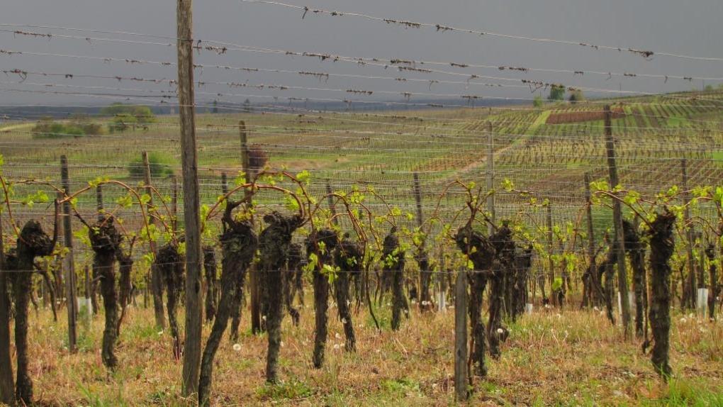 Strada dei vini d'Alsazia 2