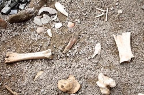 pleistocene a Roma