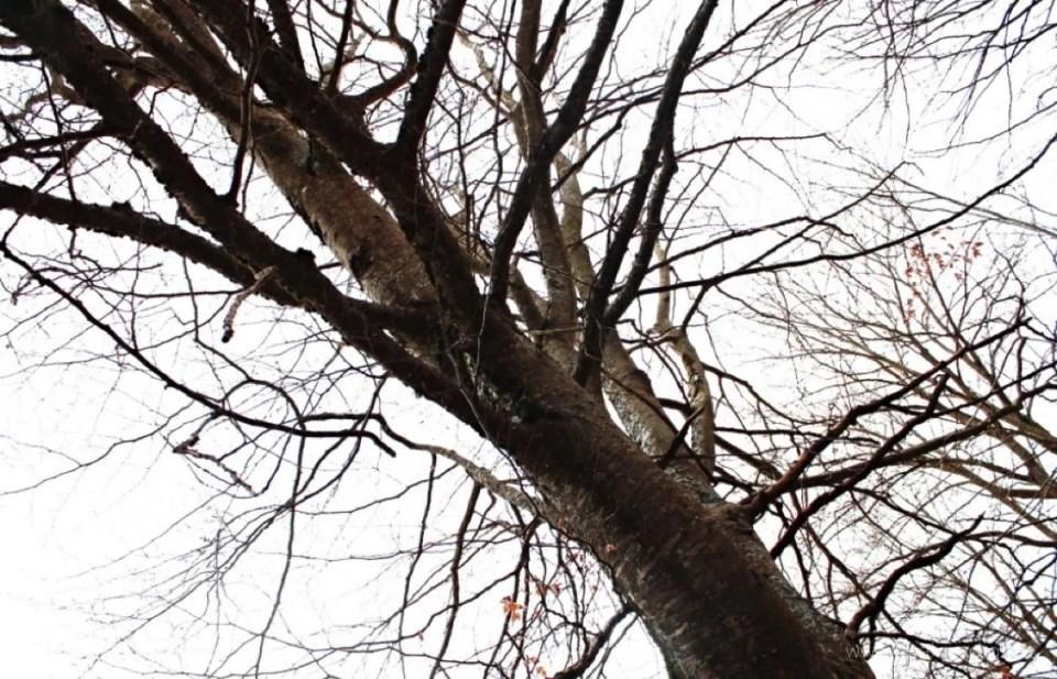 interpretazione ambientale  - albero