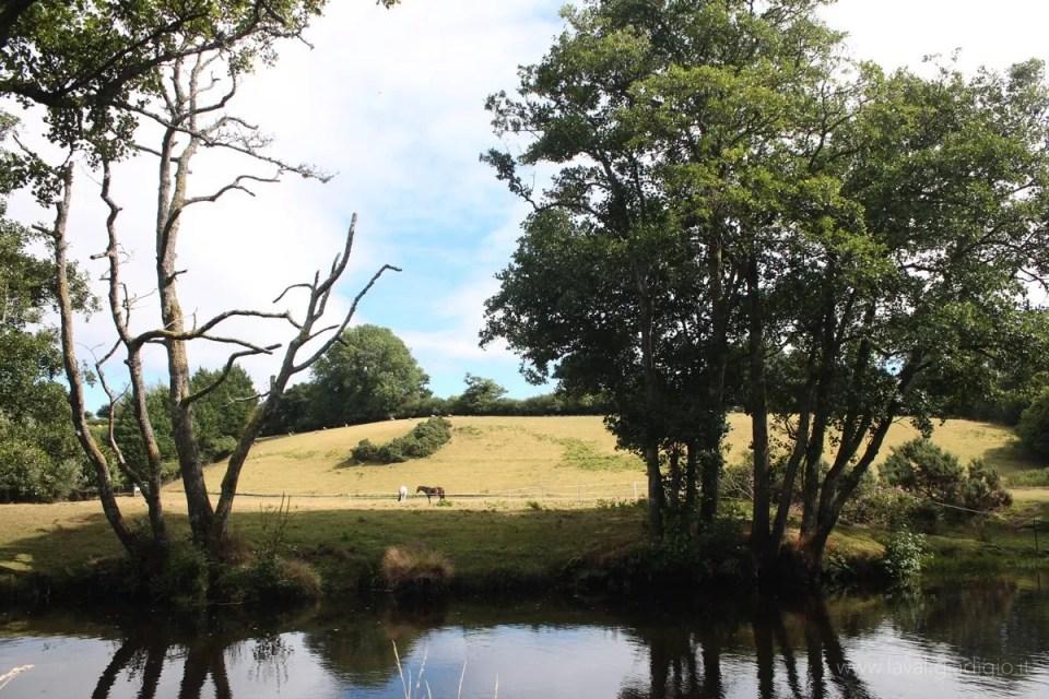 inghilterra del sud itinerario dartmoor
