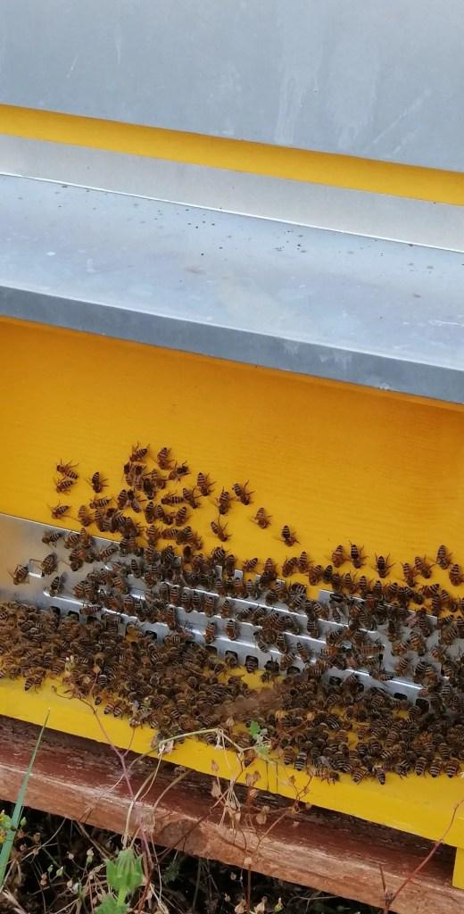 bio fattoria racconti del carrubo api arnie