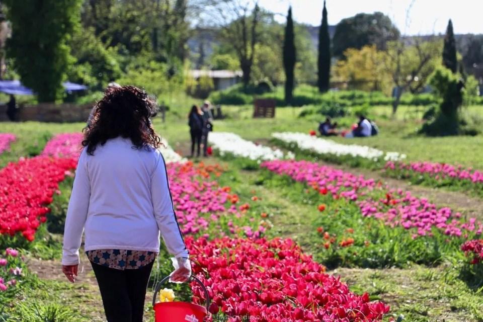 tulipark di roma cogliere