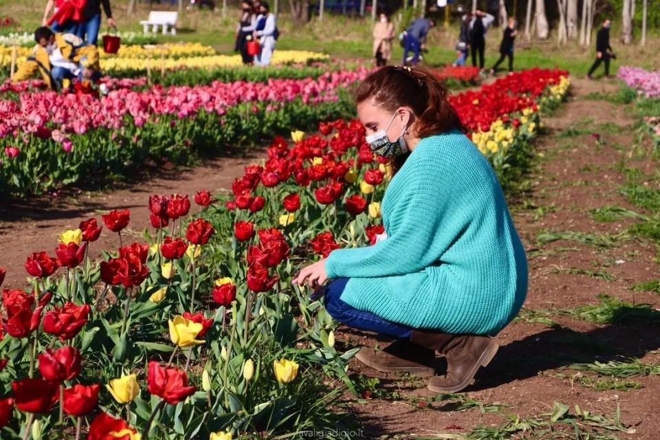 tulipark di roma