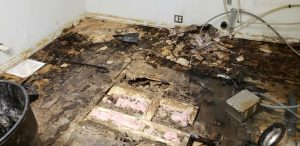 Water Damage on Sub Floor where LVP had been installed.