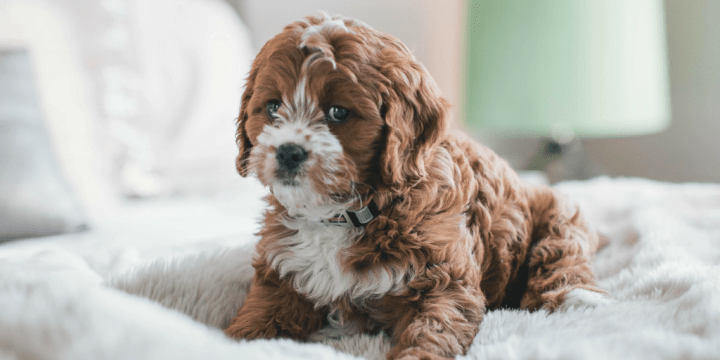 Home Decor With Pet and Child Safety in Mind