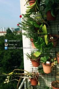PIC12481_Balcony_WP