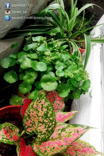 PIC12697_Balcony_Plants_WP