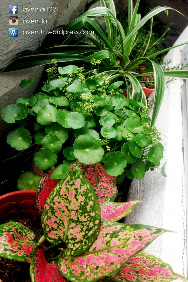 PIC12697_Balcony_Plants_WP