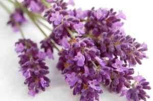 https://lavenderlotion.net/