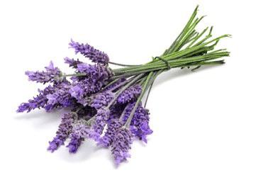 Lavender Bundle graphic