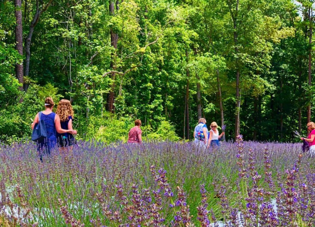 VISIT OUR FARM – LAVENDER OAKS FARM Chapel Hill, NC