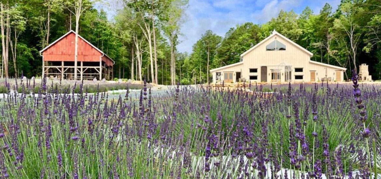 LAVENDER OAKS FARM Chapel Hill, NC – LAVENDER FARM & HISTORIC BARNS