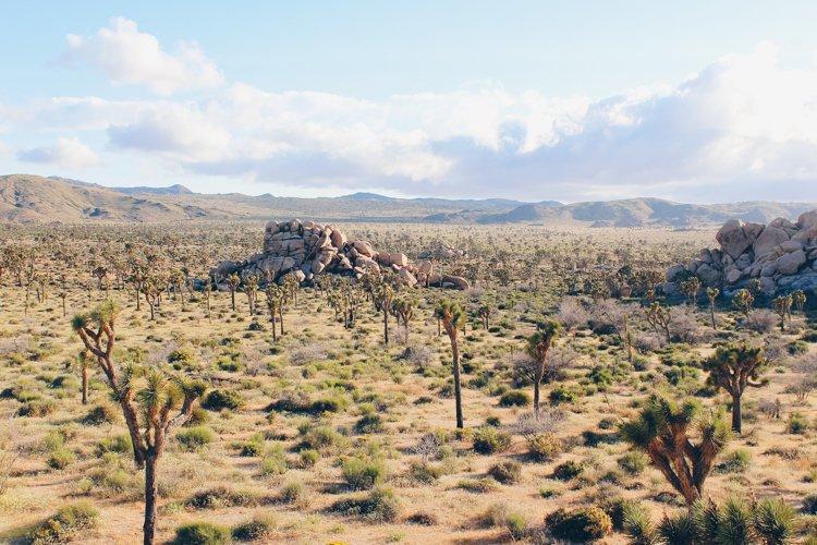Joshua Tree National Park - How to Understand God's Heart