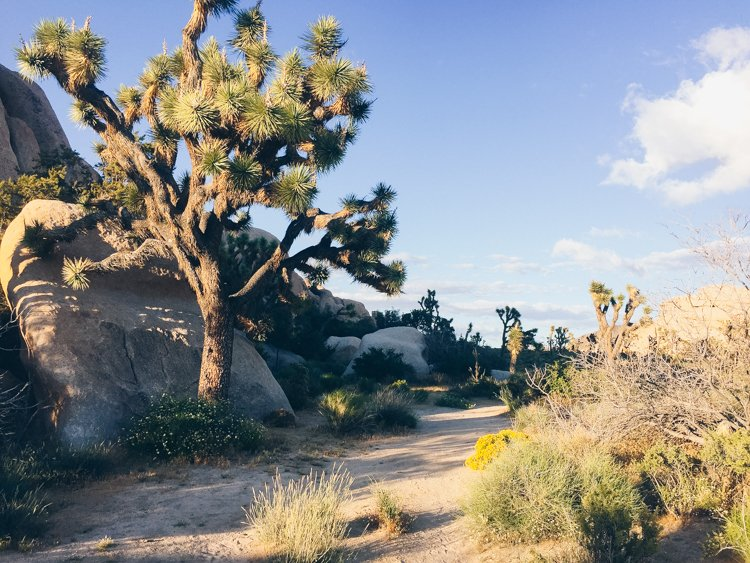 Joshua Tree National Park - How to Understand God's Heart