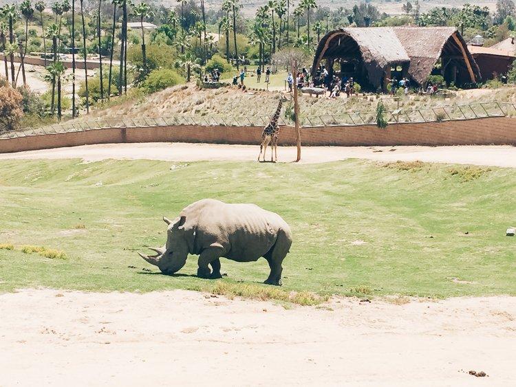 Rhino - San Diego Zoo Safari Park