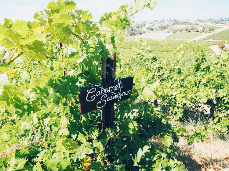 Cabernet Sauvignon - Wine Tasting Vindemia Vineyard and Winery