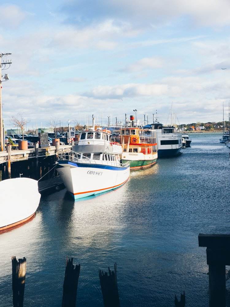 Odyssey Whale Watching - Things to do in Portland, Maine