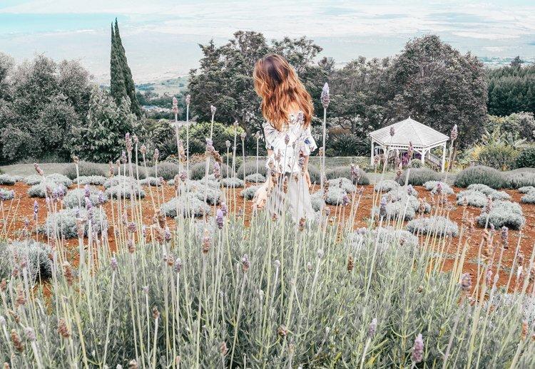 Lavender Vines testimony