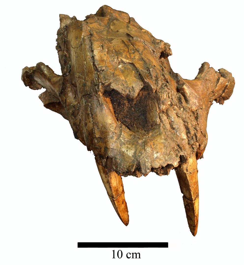 Especies fósiles