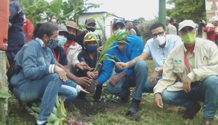 Plantan en el municipio Carpe más de 200 plantas con el plan de arbolización