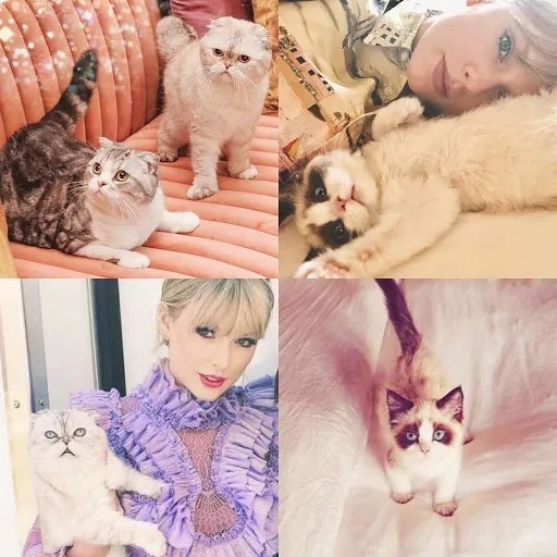 The cats of Taylor Swift/Photo: Fanpop
