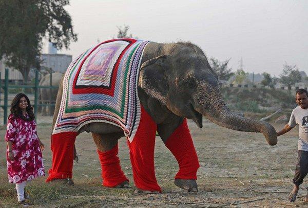 elefanti_india_2