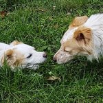 Pippi e Rudy, quando i cani si incontrano