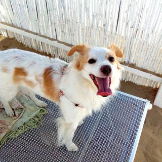 Pippi, cane in spiaggia a Rimini Dog Beach No problem
