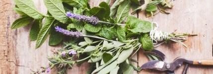 aromatherapy_herbs