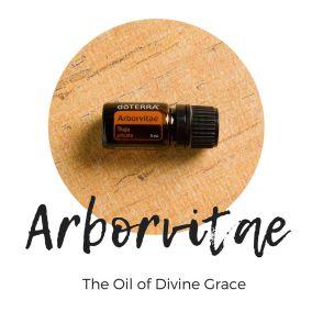 Arborvitae divine grace