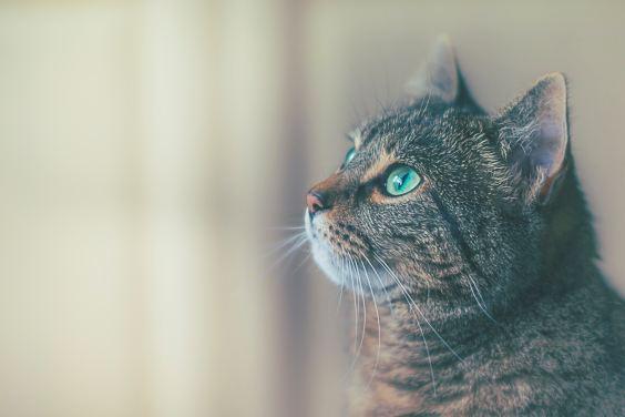 Cat - focus