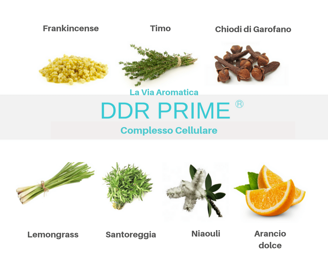 DDR-Prime-ingredienti.png