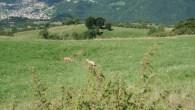 Amichevole_Monte_Farno_22_07_2012_14