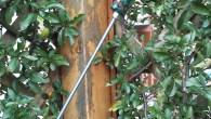 Cerca frecce2