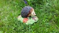 LaVia di Mezzo è anche la casa di molti bellissimi animali, oggi si è avvistato un riccio.