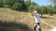 campionato-italiano-tiro-arco_3
