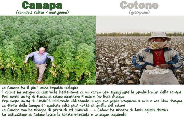 CANAPA E COTONE  laviadiuscita.net