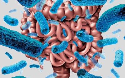 Ökosystem Darm – Gesunde Darmflora – starke Immunabwehr