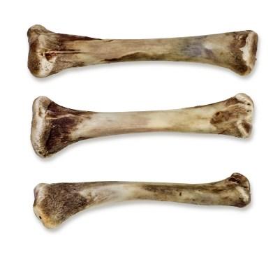 huesos-dañinos-para-los-perros